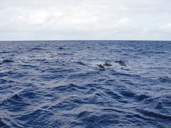 ma, 12/04/2010 - 02:34 - 01. dolfijnenshow in de Stille oceaan