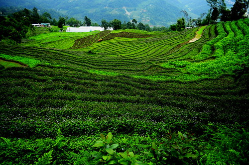 step farming in sikkim | by soumyajit pramanick