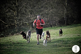 The Dog Jogger