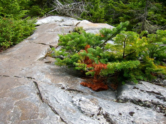 2:52:18 (58%): hiking newhampshire orford mtcube northpeaksidetrail