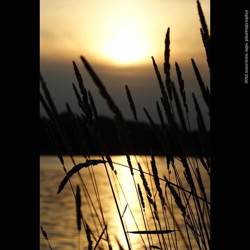 park sunset summer sun sunlight reflection nature water grass silhouette square golden evening pond surface schaumburg tones thegalaxy bussewoodsforestpreserve