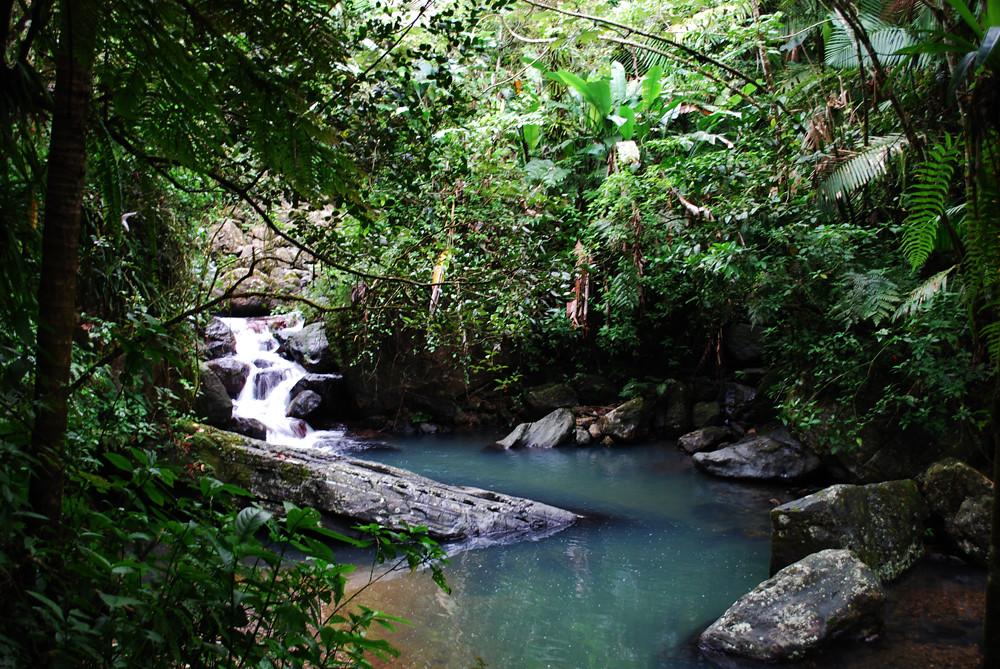 River El Yunque National Forrest - Puerto Rico