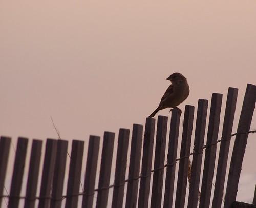 Not a Beach Bird | by fauxto_digit