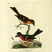 A general history of birds v.6