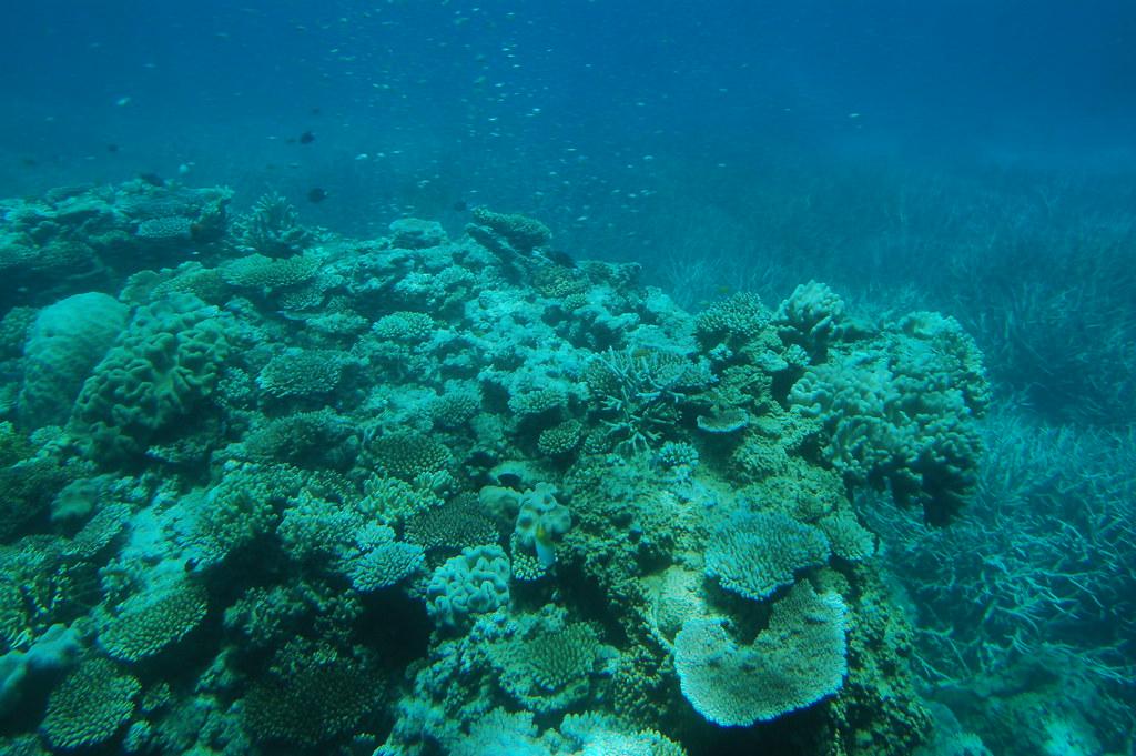 Australia Great Barrier Reef Green Island Resort Und