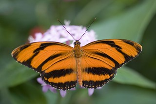 The_Butterfly_Place_20 | by StevenErat
