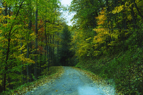 road autumn fall colors leaves path cranberry wv westvirginia rivers wilderness rodlewis