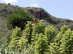 Jardin Canario - Butterfly | by elsua