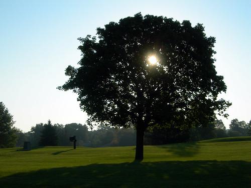 morning summer tree sunrise michigan golfcourse coolpix pointandshoot grandrapids grandrapidsmi coolpix7600 e7600 watermarkcountryclub zip49546