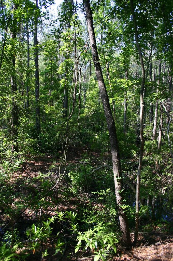 Forest jacksonville arboretum and gardens site meg - Jacksonville arboretum gardens ...