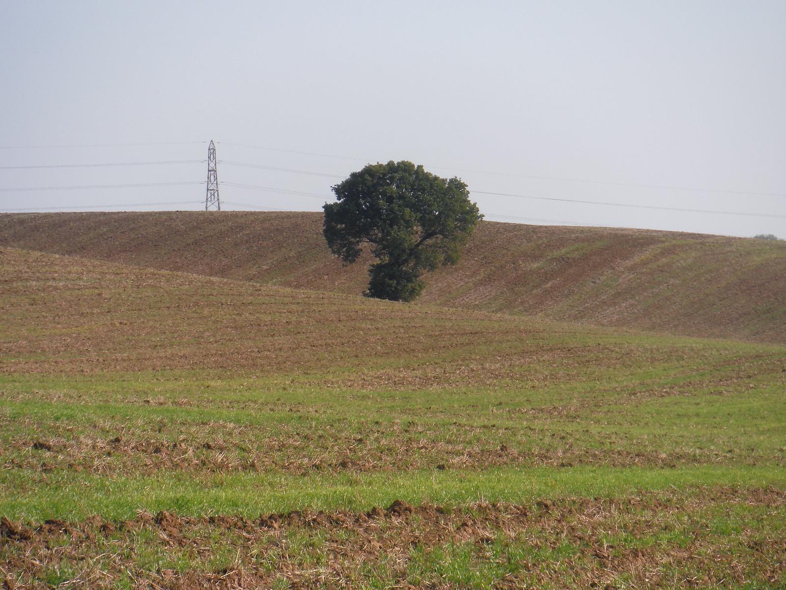 Fieldscape (III) SWC Walk 159 South Woodham Ferrers to North Fambridge