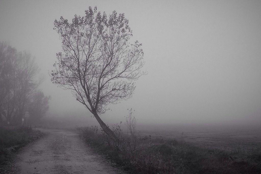 Niebla