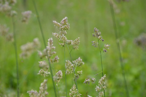 Fleurs des champs   by K1_Camz