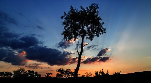 sunset southafrica 66 mpumalanga lydenburg site66 kuduranch kuduprivatenaturereserve kudugameranch