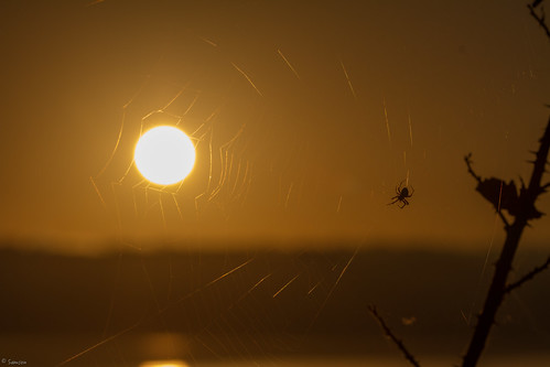 spider spiderweb sunrise crabtree lake lakecrabtreecountypark canon canon7d 7def100mm ef70300mmf456lisusm sun sky outdoor nc ncstateparks ncpark flickrfriday peace 7d canonlens canoneos7d eos