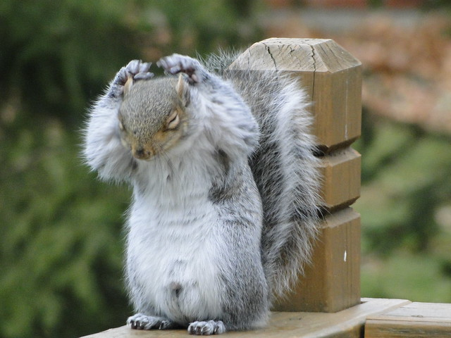 Cute squirrel cleaning up :)