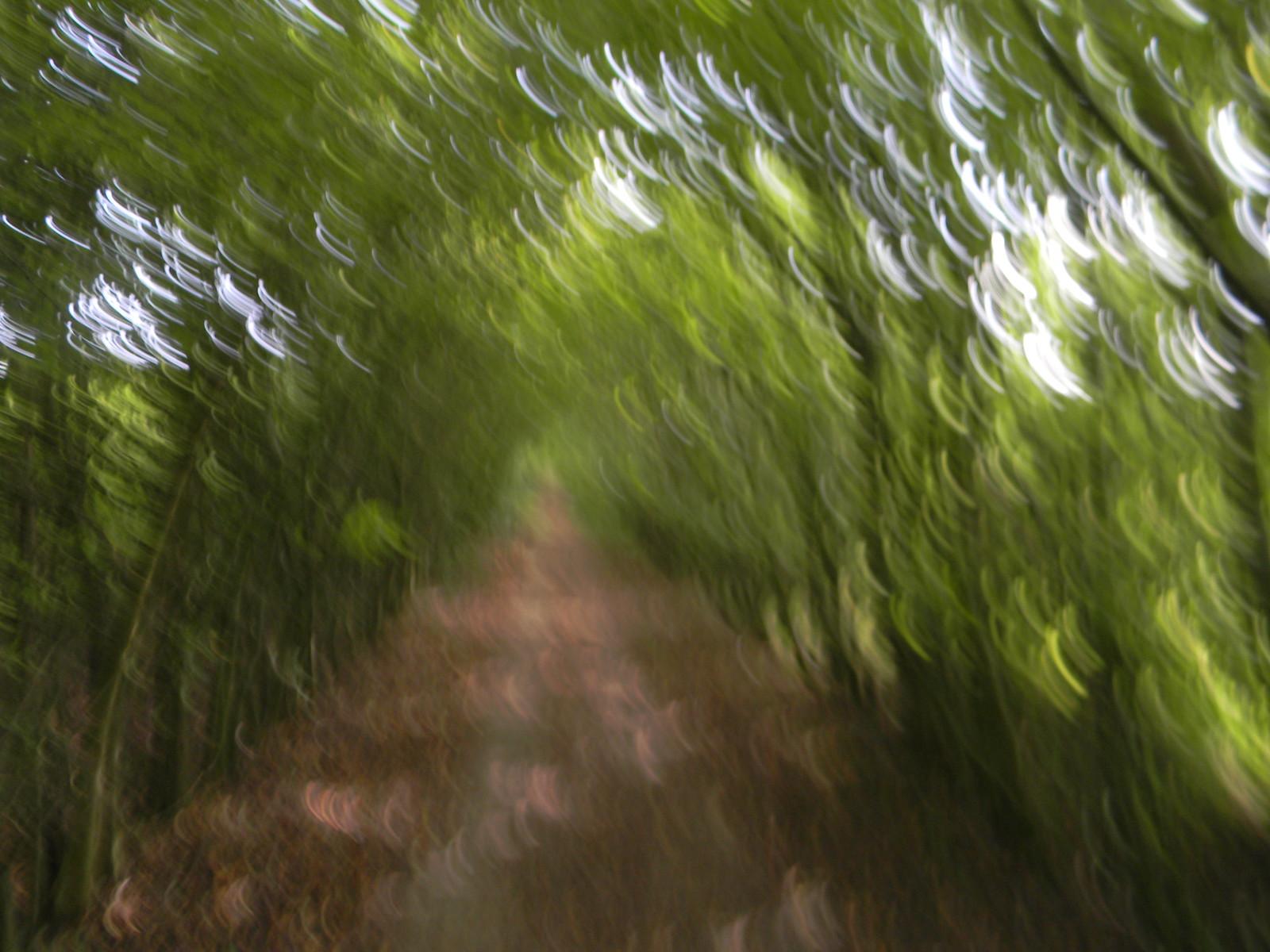Treelined 'tunnel' Eynsford Circular