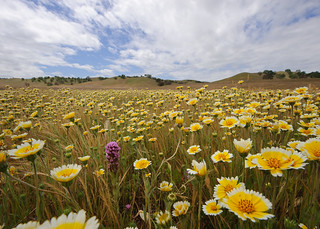Steve Sinton Ranch | by NRCS California
