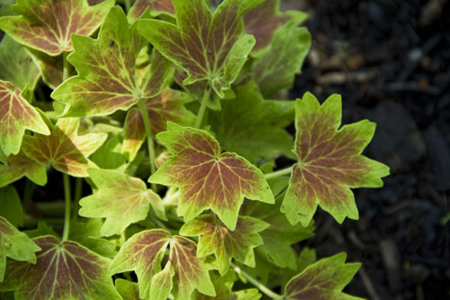 Foliage1