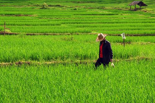 thailand tailandia thailandia