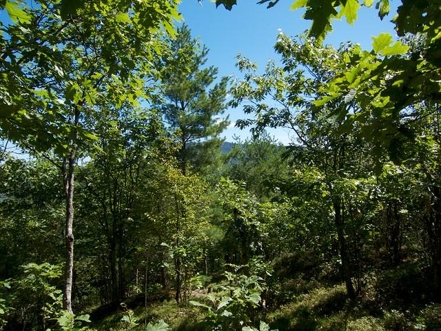 0:46:30 (46%): hiking newhampshire orford sundaymountain crossrivendelltrail