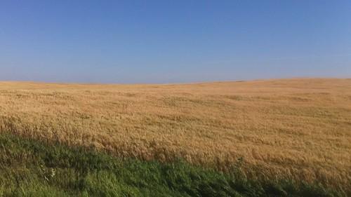 field wind grain