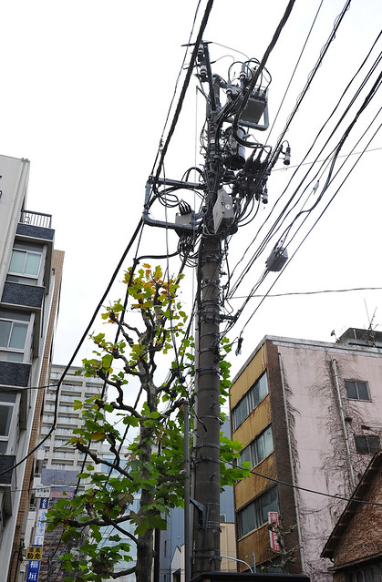 the organic electricity pole