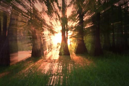 nature sunrise landscape florida swamp cypress floralcity zoomblasting