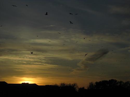 trees sunset sky birds clouds digital canon sooc
