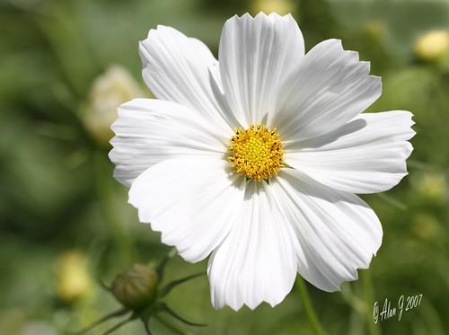 ny newyork flower canon 7d albany upstatenewyork washingtonpark mygearandme 100mmmacrof28lisusm