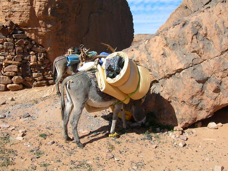 Algeria_0232