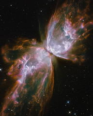 butterfly_nebula-ps51_8x10