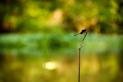 Cabra-cega | by tarsobessa