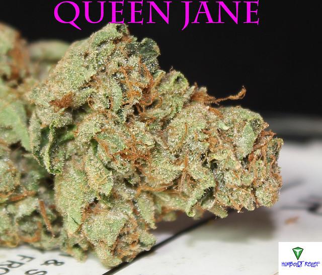 Queen Jane Close Up2