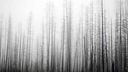 Fog | by FladagerPhotography