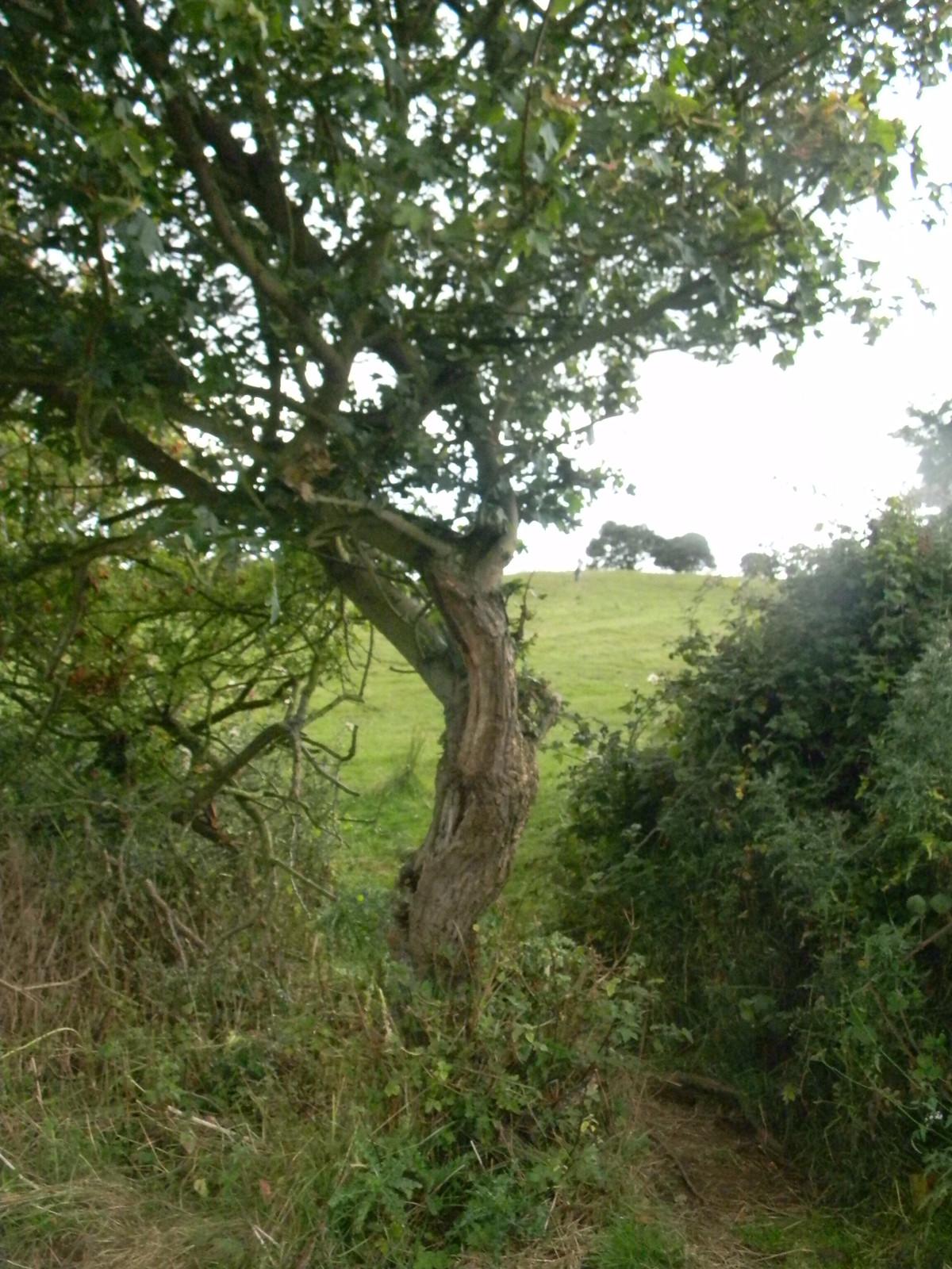 tree Moreton-in-Marsh Circular