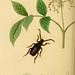 British entomology v.2