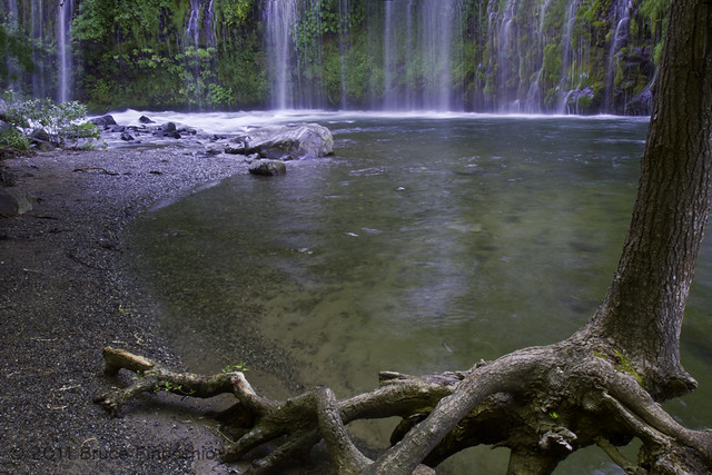 Mossbrae Falls, Tree Roots, and The Sacramento River