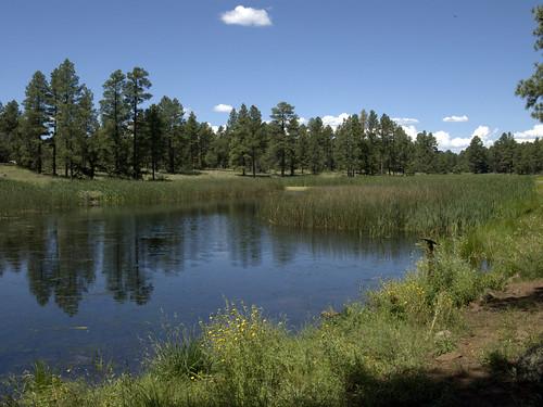 bigspringsenvironmentalstudyarea bigsprings pinetoplakeside pinetop pinetoparizona whitemountains springs wetlands meadows arizona geo:lat=3413763383882727 geo:lon=10996859583432388 geotagged riparian riparianzone riparianarea riparianhabitat
