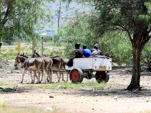 africa road tree car canon traffic wheels donkey dust namibia chariot southernafrica ef70200f4isusm eos7d usakos ringexcellence
