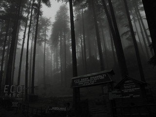Lost-in-Fogs---Dhanaulti-Eco-park | by NChandra81