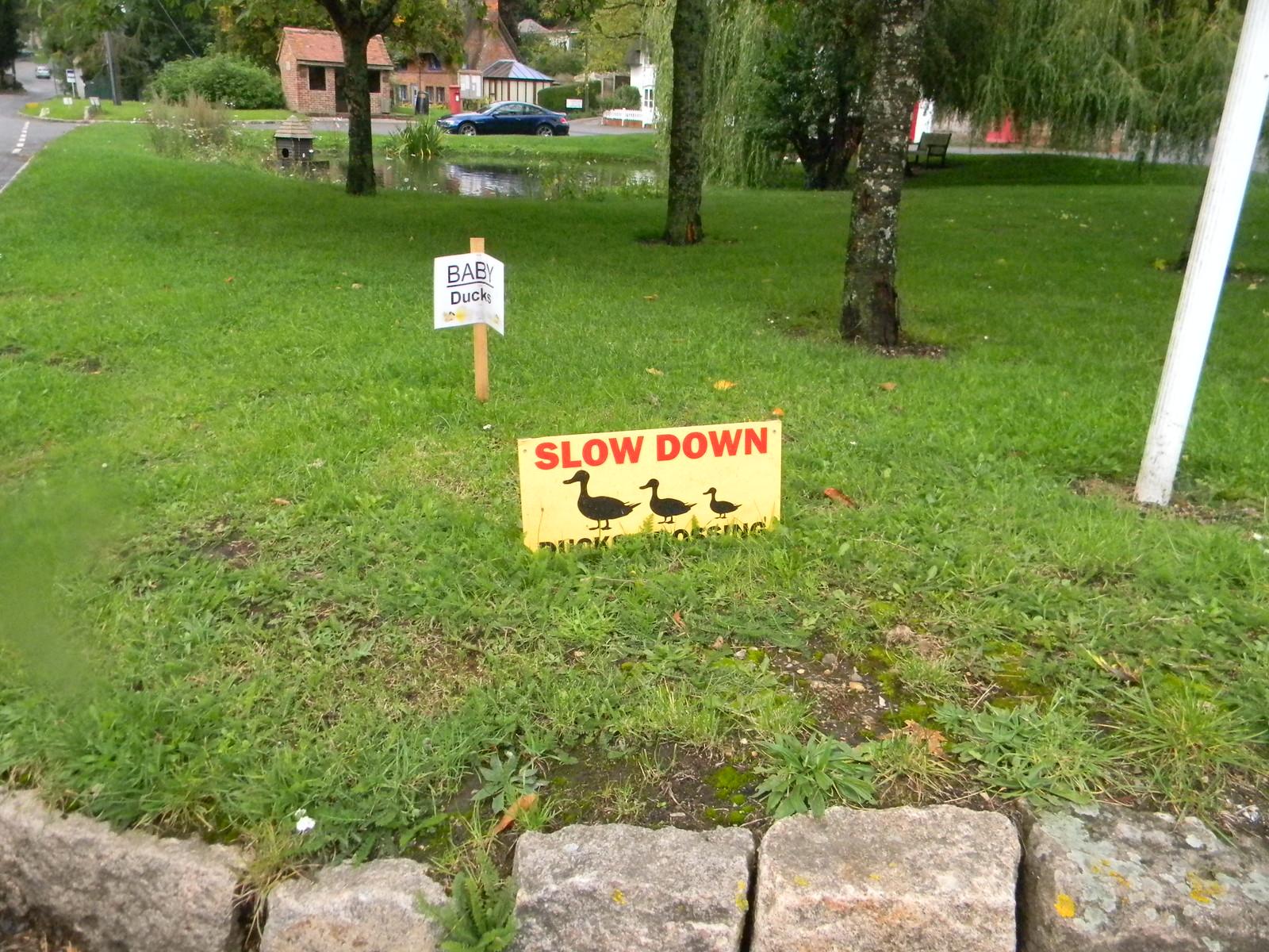 Duck signs. N Waltham Overton Circular