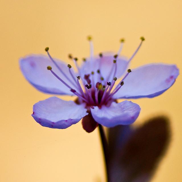 Time for a blossom