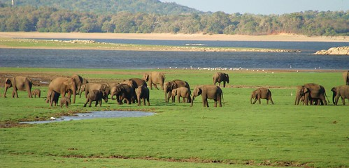 Minneriya National Park | by Rakhitha M. Karunarathne