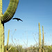 Best of Tucson Community Initiative: Jan - May 2011