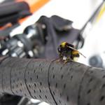 20110807北竜ひまわりサイクリング_172