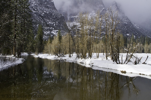 Winter Cottonwoods Along The Merced River