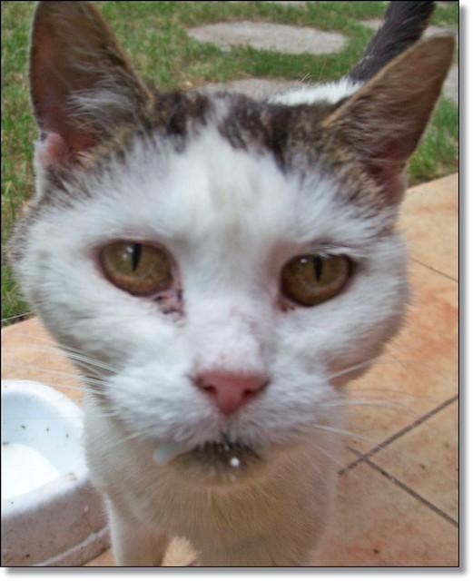 Old cat of my friend-Barátnőm öreg cicája