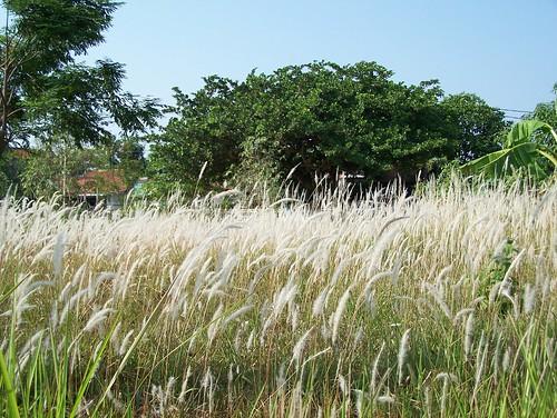 white green reed nature beautiful kodak fields z650 reedfields