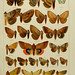 The Macrolepidoptera of the world. v.3. plates